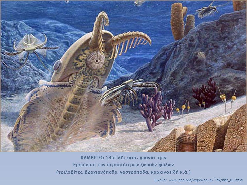 ΚΑΜΒΡΙΟ: 545-505 εκατ. χρόνια πριν