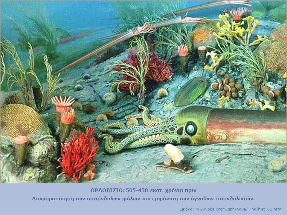 ΟΡΔΟΒΙΣΙΟ: 505-438 εκατ. χρόνια πριν