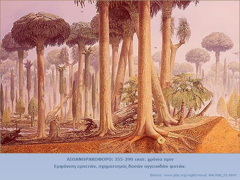 ΛΙΘΑΝΘΡΑΚΟΦΟΡΟ: 355-290 εκατ. χρόνια πριν
