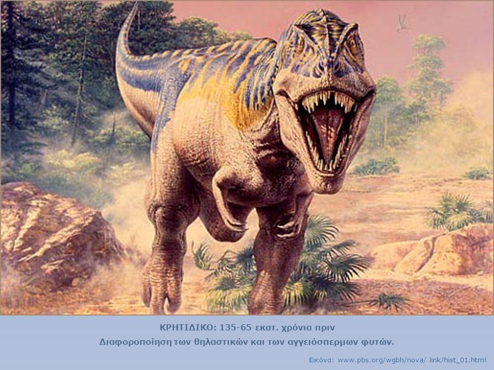 ΚΡΗΤΙΔΙΚΟ: 135-65 εκατ. χρόνια πριν