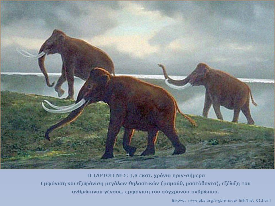 ΤΕΤΑΡΤΟΓΕΝΕΣ: 1,8 εκατ. χρόνια πριν-σήμερα