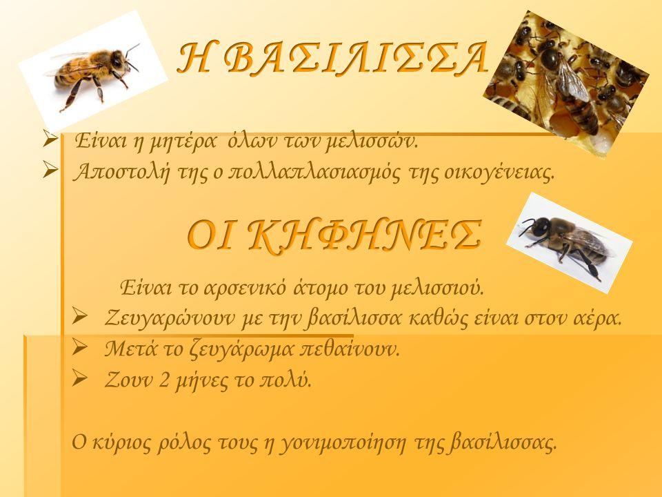 Η ΒΑΣΙΛΙΣΣΑ ΟΙ ΚΗΦΗΝΕΣ Είναι η μητέρα όλων των μελισσών.