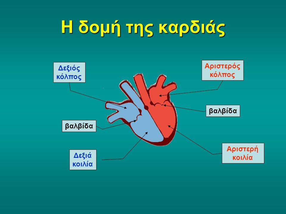 Η δομή της καρδιάς Αριστερός κόλπος Δεξιός κόλπος βαλβίδα βαλβίδα