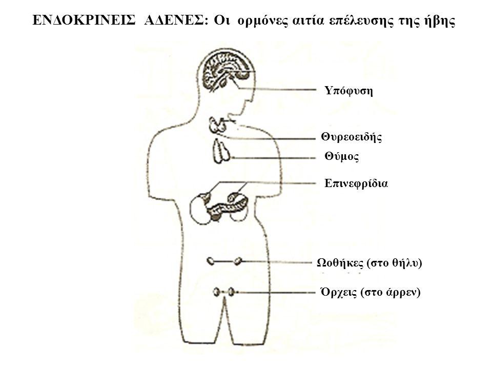 ΕΝΔΟΚΡΙΝΕΙΣ ΑΔΕΝΕΣ: Οι ορμόνες αιτία επέλευσης της ήβης