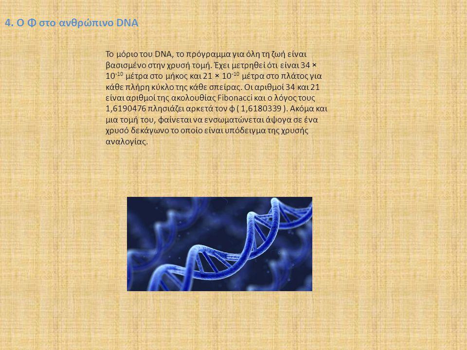 4. Ο Φ στο ανθρώπινο DNA