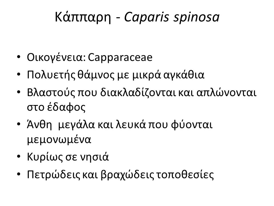 Κάππαρη - Caparis spinosa