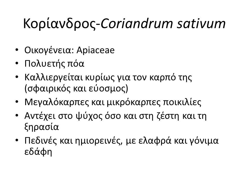 Κορίανδρος-Coriandrum sativum