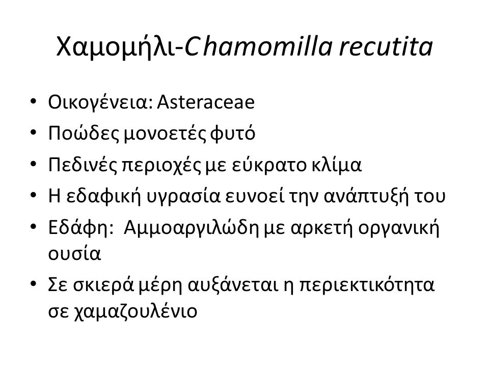 Χαμομήλι-C hamomilla recutita