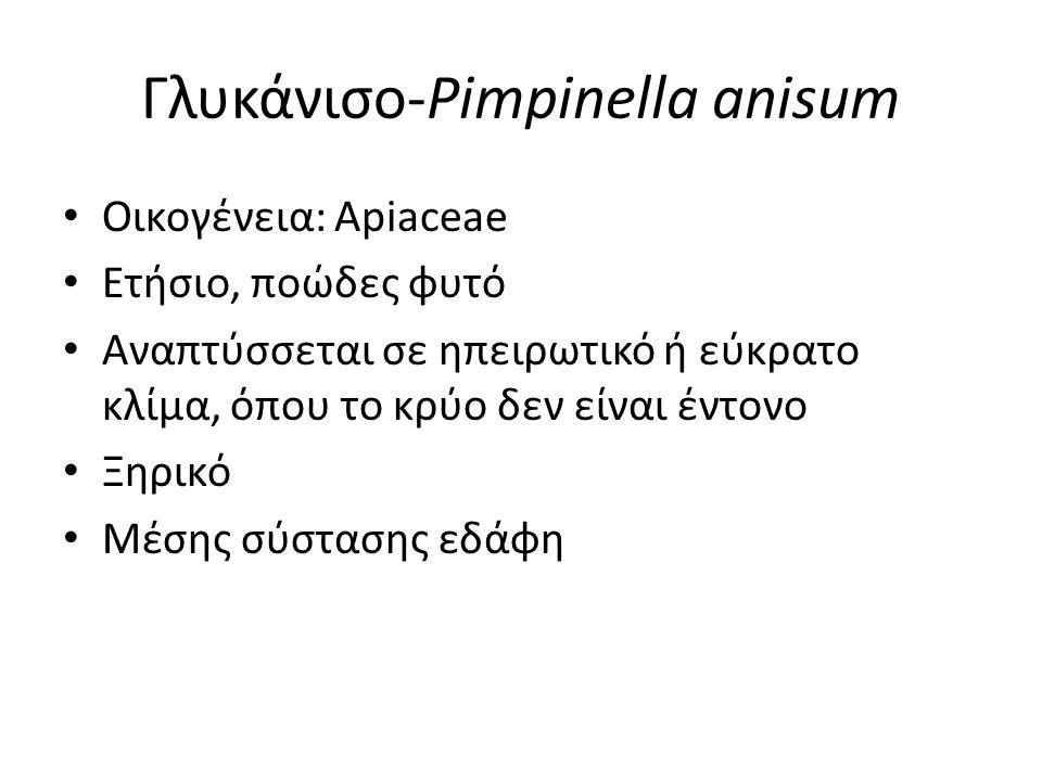 Γλυκάνισο-Pimpinella anisum