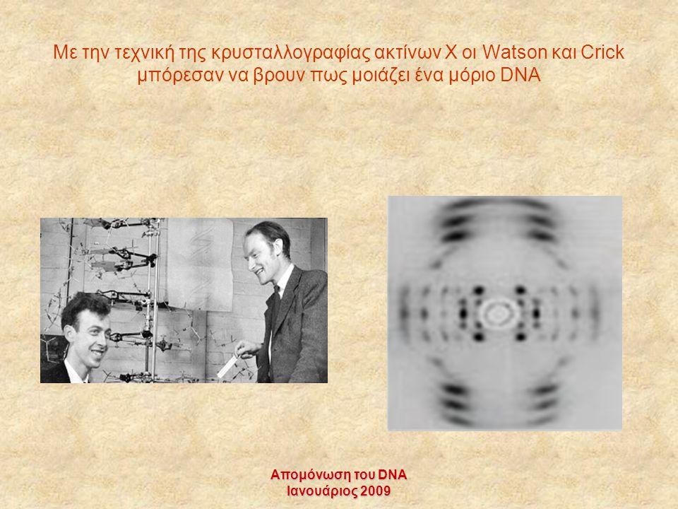 Με την τεχνική της κρυσταλλογραφίας ακτίνων Χ οι Watson και Crick μπόρεσαν να βρουν πως μοιάζει ένα μόριο DNA