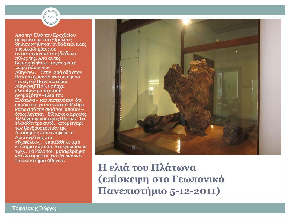Η ελιά του Πλάτωνα (επίσκεψη στο Γεωπονικό Πανεπιστήμιο 5-12-2011)