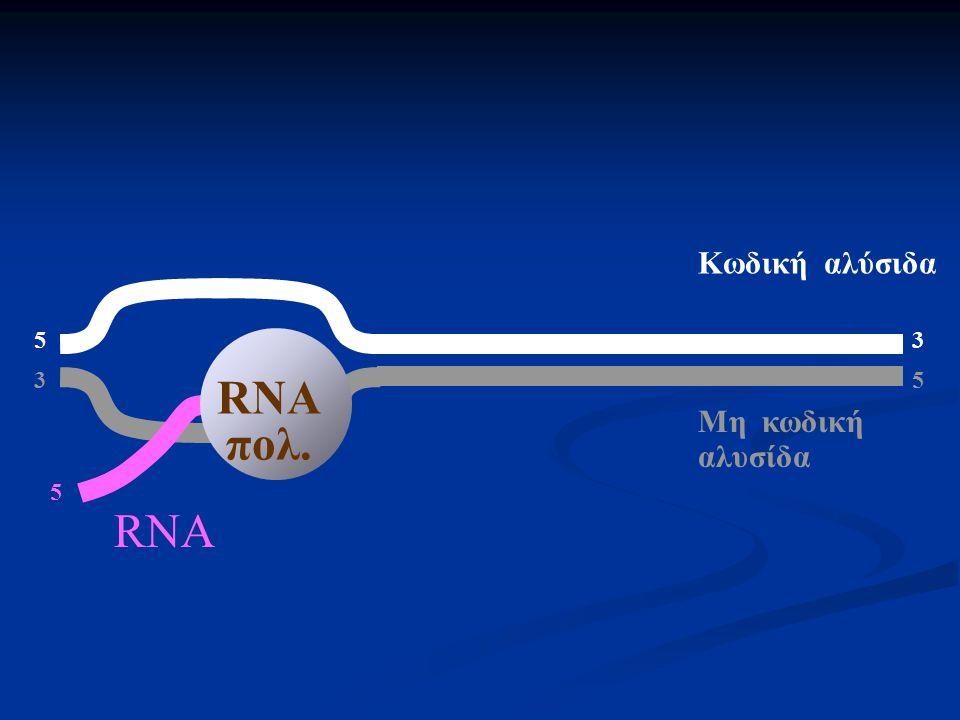 5 3 Μη κωδική αλυσίδα Κωδική αλύσιδα RNA πολ. 5 RNA
