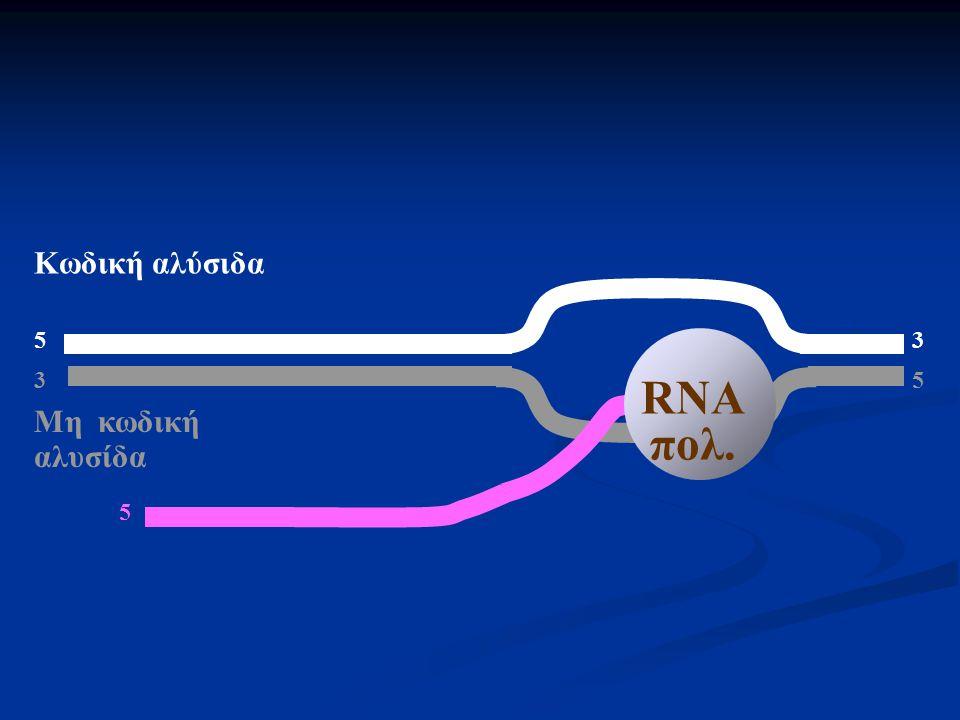 Κωδική αλύσιδα 5 3 RNA πολ. 3 5 Μη κωδική αλυσίδα 5