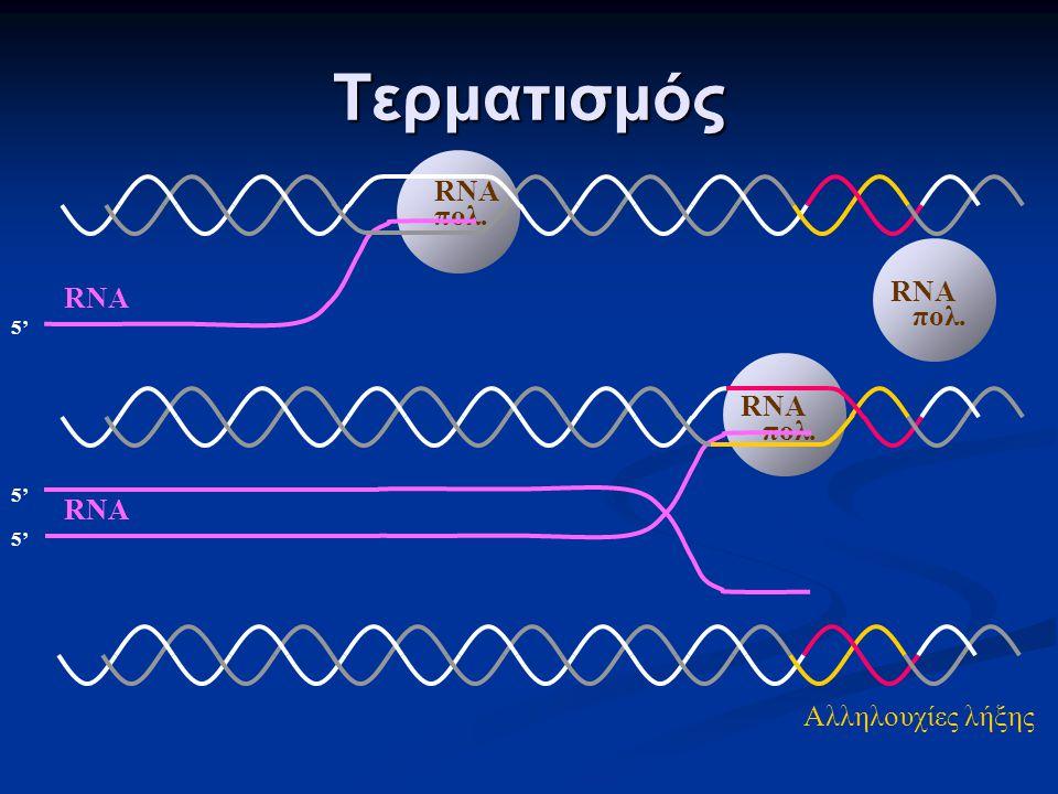 Τερματισμός RNA πολ. 5' RNA πολ. 5' RNA πολ. 5' Αλληλουχίες λήξης