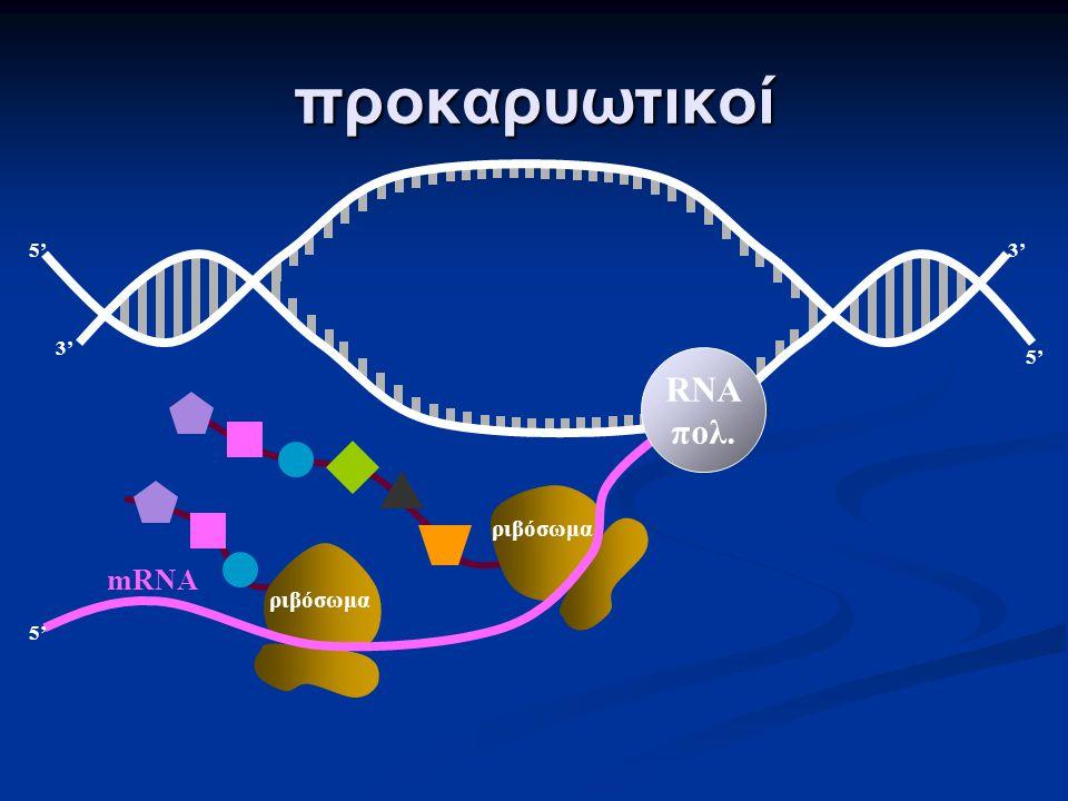 προκαρυωτικοί 3' 5' 5' mRNA RNA πολ. ριβόσωμα ριβόσωμα