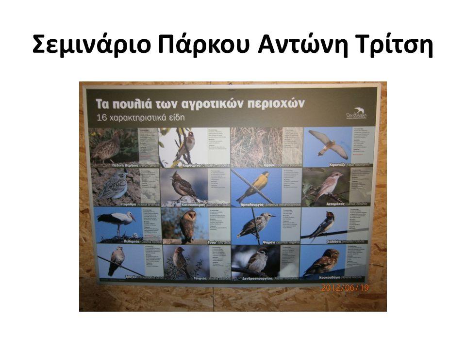 Σεμινάριο Πάρκου Αντώνη Τρίτση