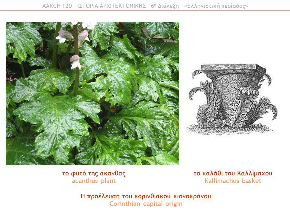 το καλάθι του Καλλίμαχου Kallimachos basket