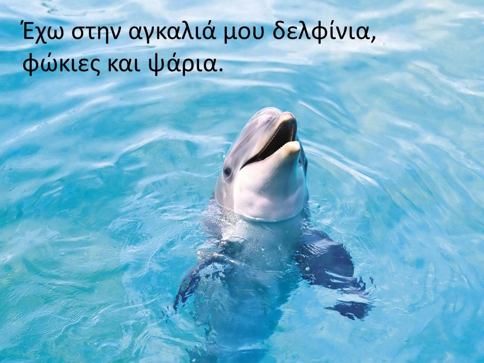 Έχω στην αγκαλιά μου δελφίνια, φώκιες και ψάρια.