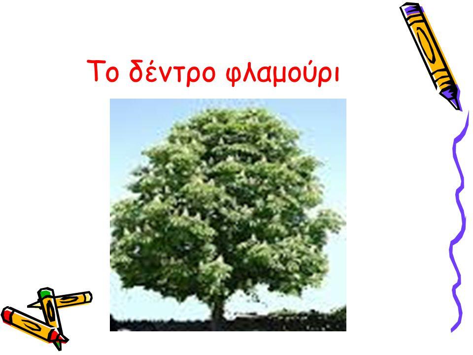 Το δέντρο φλαμούρι