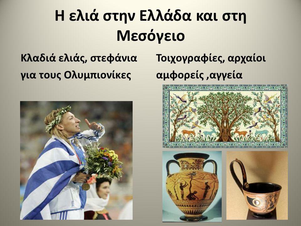 Η ελιά στην Ελλάδα και στη Μεσόγειο