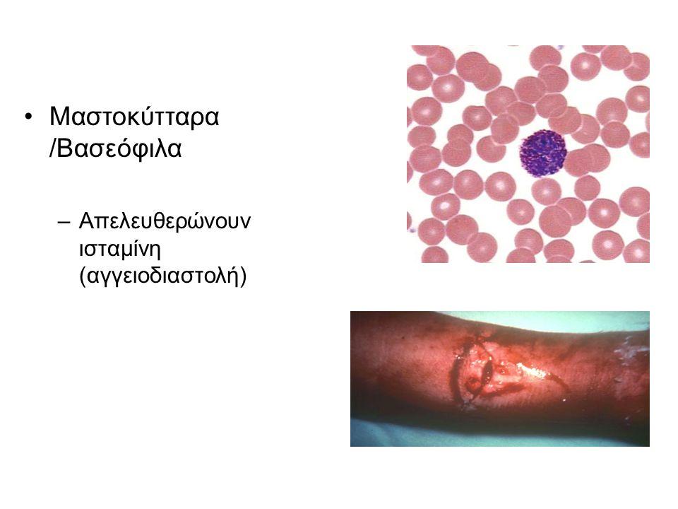 Μαστοκύτταρα /Βασεόφιλα