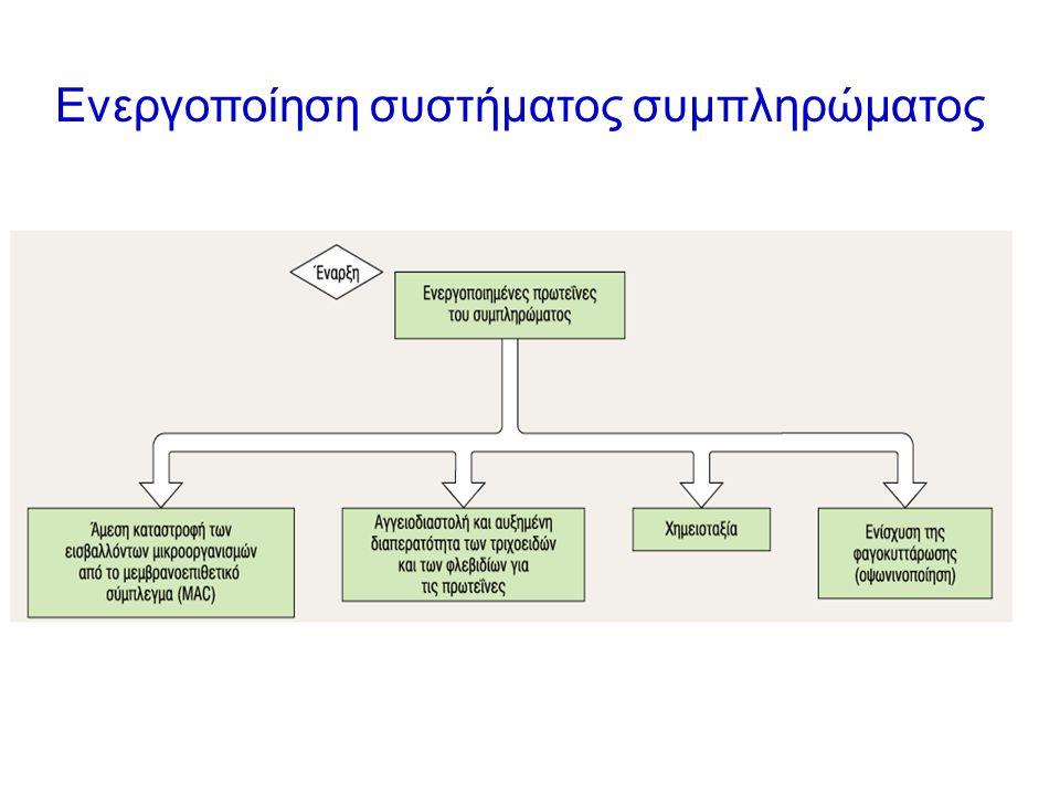 Ενεργοποίηση συστήματος συμπληρώματος