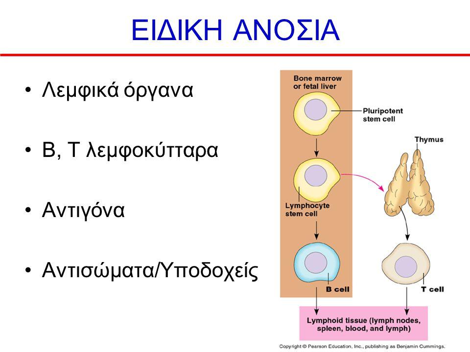ΕΙΔΙΚΗ ΑΝΟΣΙΑ Λεμφικά όργανα B, T λεμφοκύτταρα Αντιγόνα