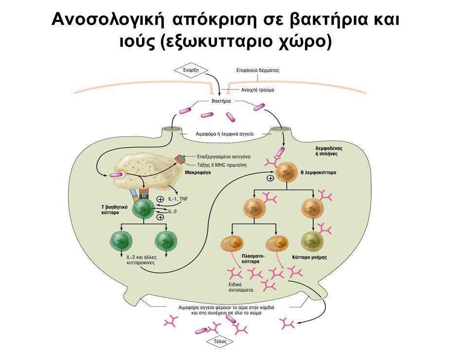 Ανοσολογική απόκριση σε βακτήρια και ιούς (εξωκυτταριο χώρο)
