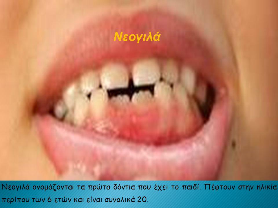 Νεογιλά Νεογιλά ονομάζονται τα πρώτα δόντια που έχει το παιδί.