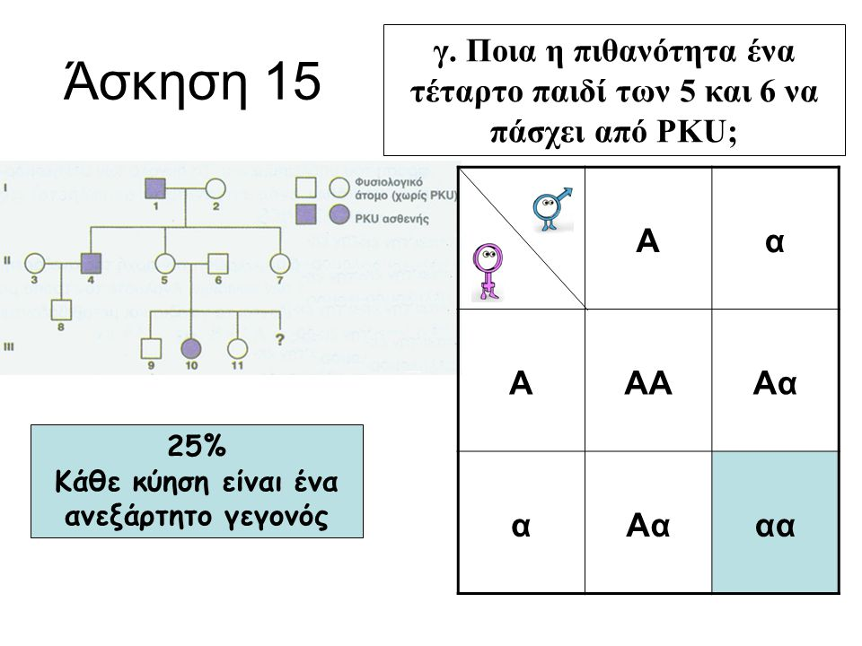 Άσκηση 15 γ. Ποια η πιθανότητα ένα τέταρτο παιδί των 5 και 6 να πάσχει από PKU; Α. α. ΑΑ. Αα. αα.