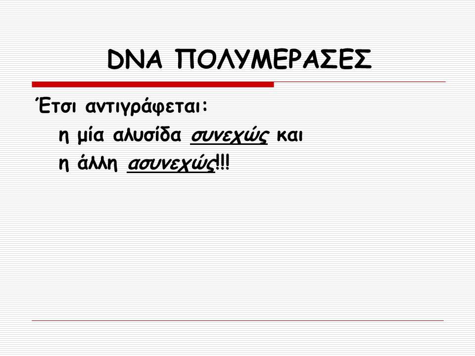DNA ΠΟΛΥΜΕΡΑΣΕΣ Έτσι αντιγράφεται: η μία αλυσίδα συνεχώς και