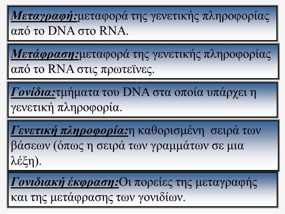 Μεταγραφή:μεταφορά της γενετικής πληροφορίας
