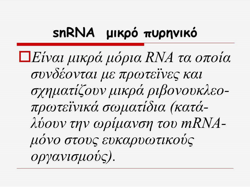 snRNA μικρό πυρηνικό