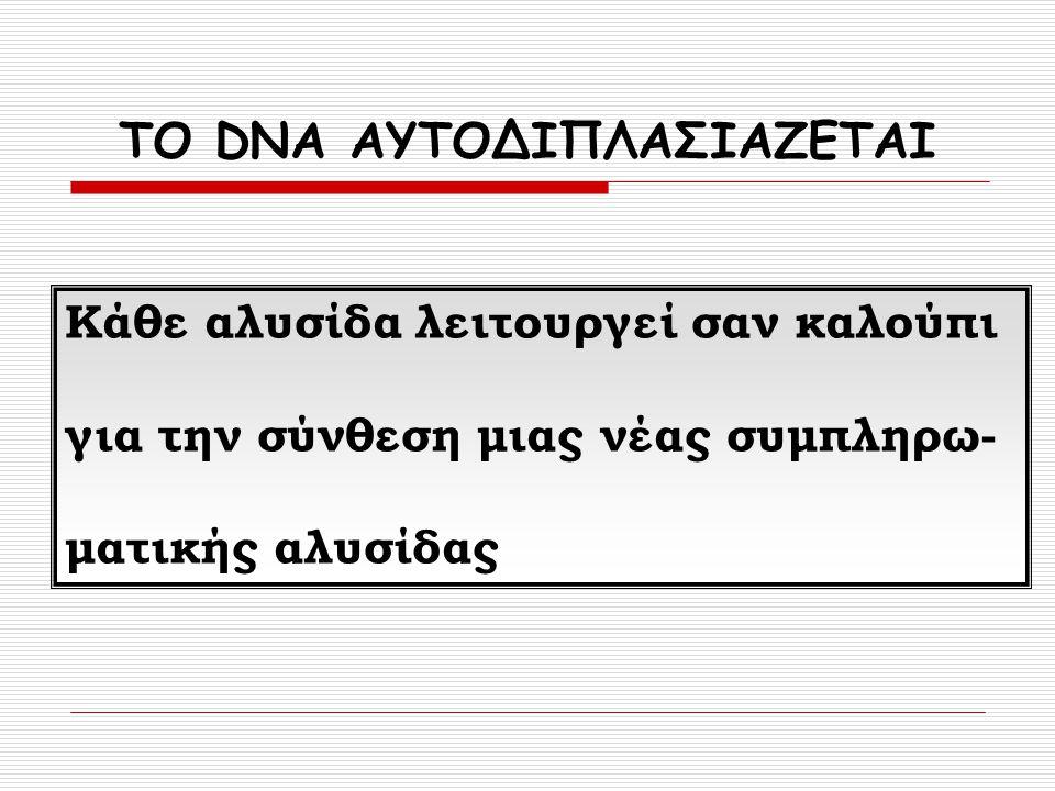 ΤΟ DNA ΑΥΤΟΔΙΠΛΑΣΙΑΖΕΤΑΙ