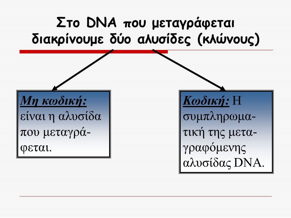 Στο DNA που μεταγράφεται διακρίνουμε δύο αλυσίδες (κλώνους)