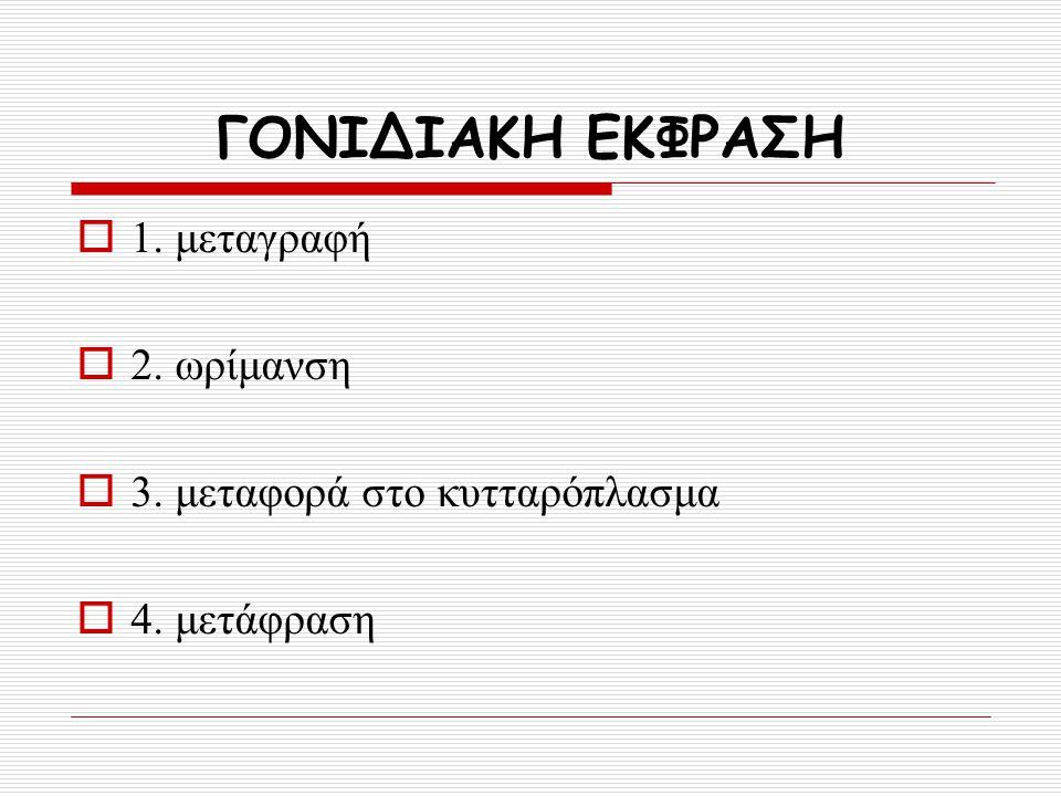 ΓΟΝΙΔΙΑΚΗ ΕΚΦΡΑΣΗ 1. μεταγραφή 2. ωρίμανση