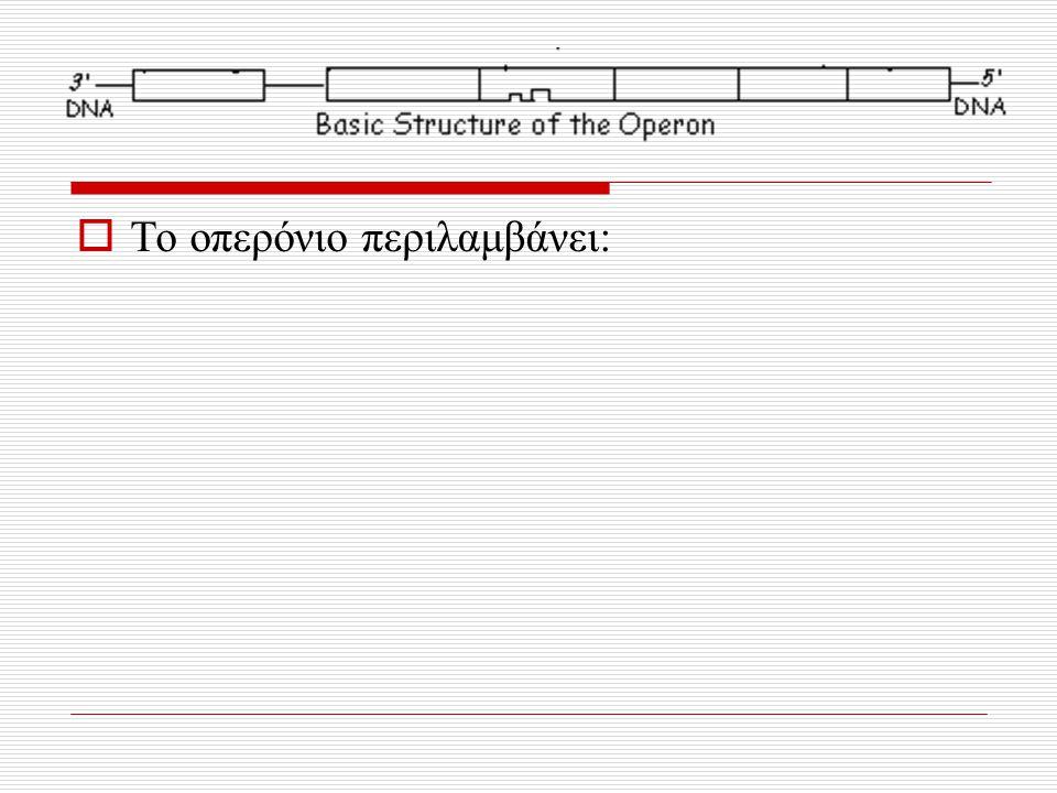 Το οπερόνιο περιλαμβάνει: