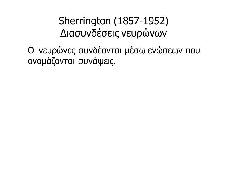 Sherrington (1857-1952) Διασυνδέσεις νευρώνων