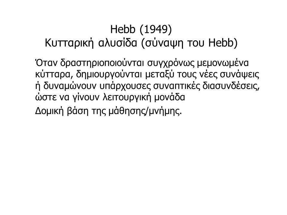 Hebb (1949) Κυτταρική αλυσίδα (σύναψη του Hebb)