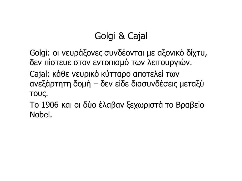 Golgi & Cajal Golgi: οι νευράξονες συνδέονται με αξονικό δίχτυ, δεν πίστευε στον εντοπισμό των λειτουργιών.