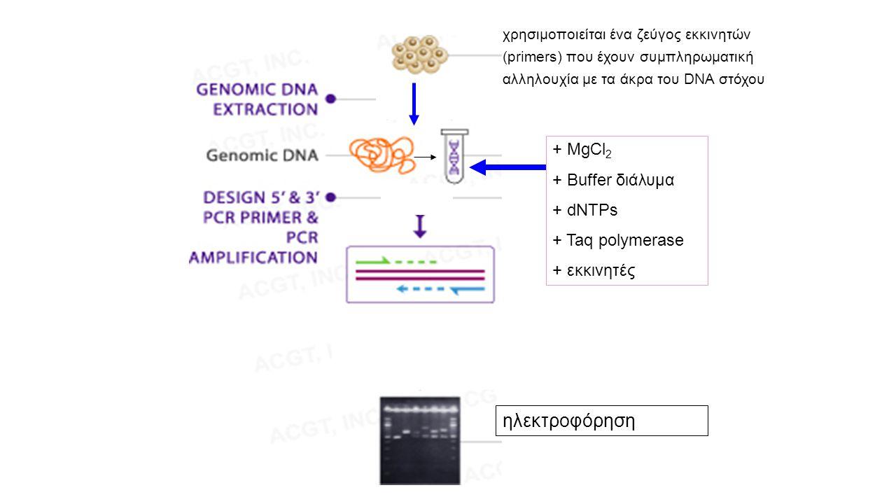 ηλεκτροφόρηση + MgCl2 + Buffer διάλυμα + dNTPs + Taq polymerase
