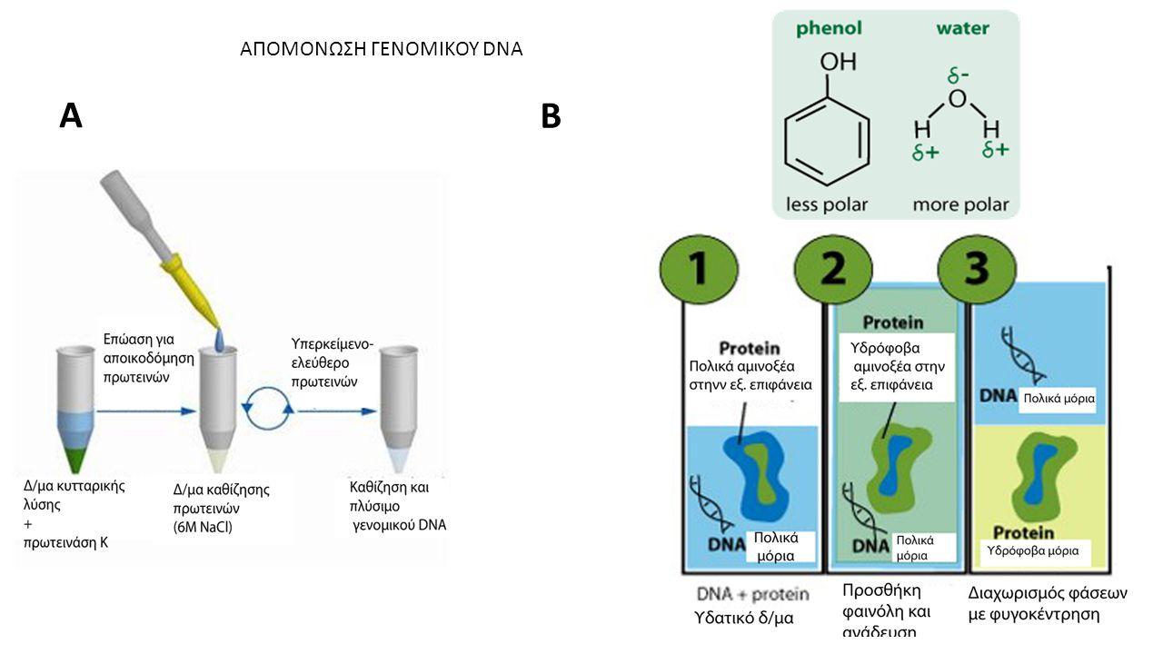 ΑΠΟΜΟΝΩΣΗ ΓΕΝΟΜΙΚΟΥ DNA