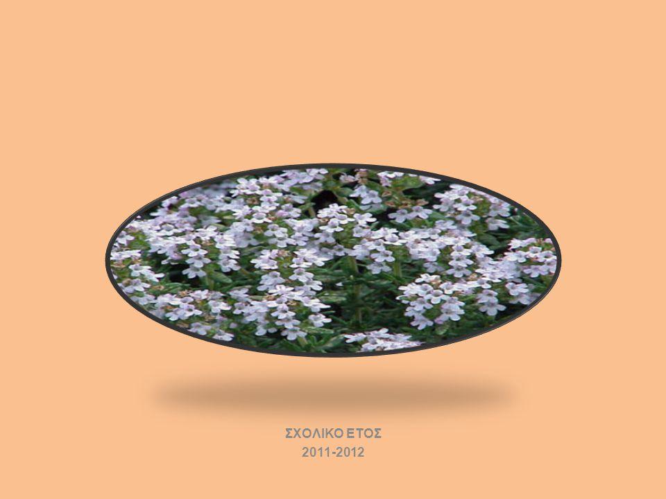ΣΧΟΛΙΚΟ ΕΤΟΣ 2011-2012