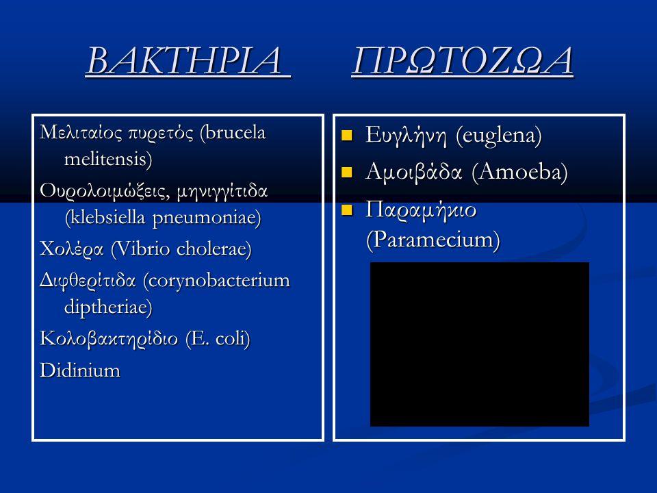 ΒΑΚΤΗΡΙΑ ΠΡΩΤΟΖΩΑ Ευγλήνη (euglena) Αμοιβάδα (Amoeba)