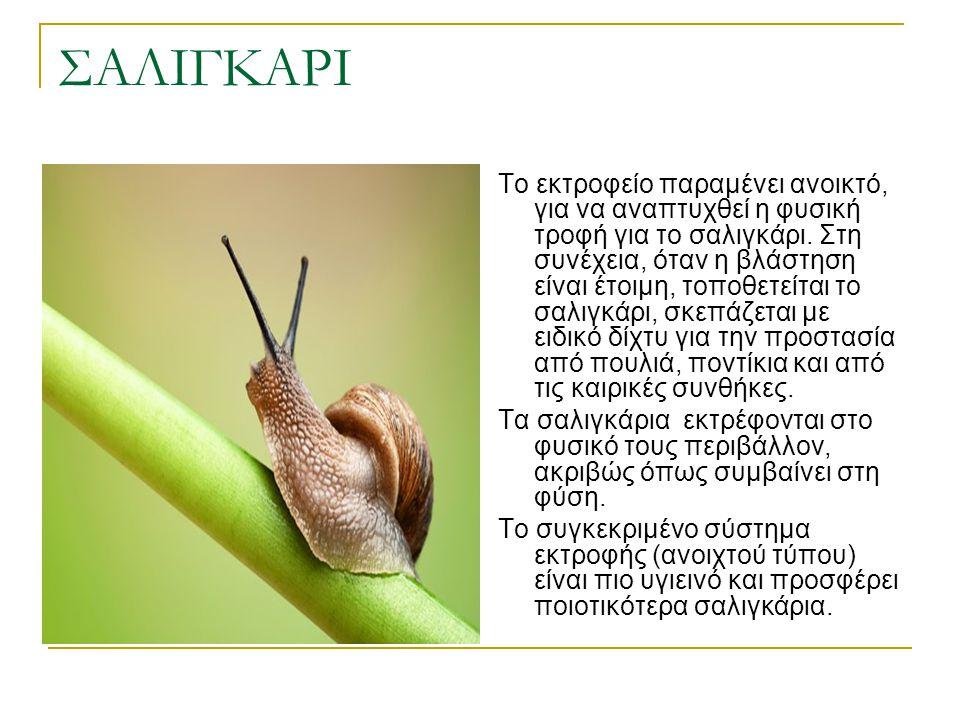 ΣΑΛΙΓΚΑΡΙ