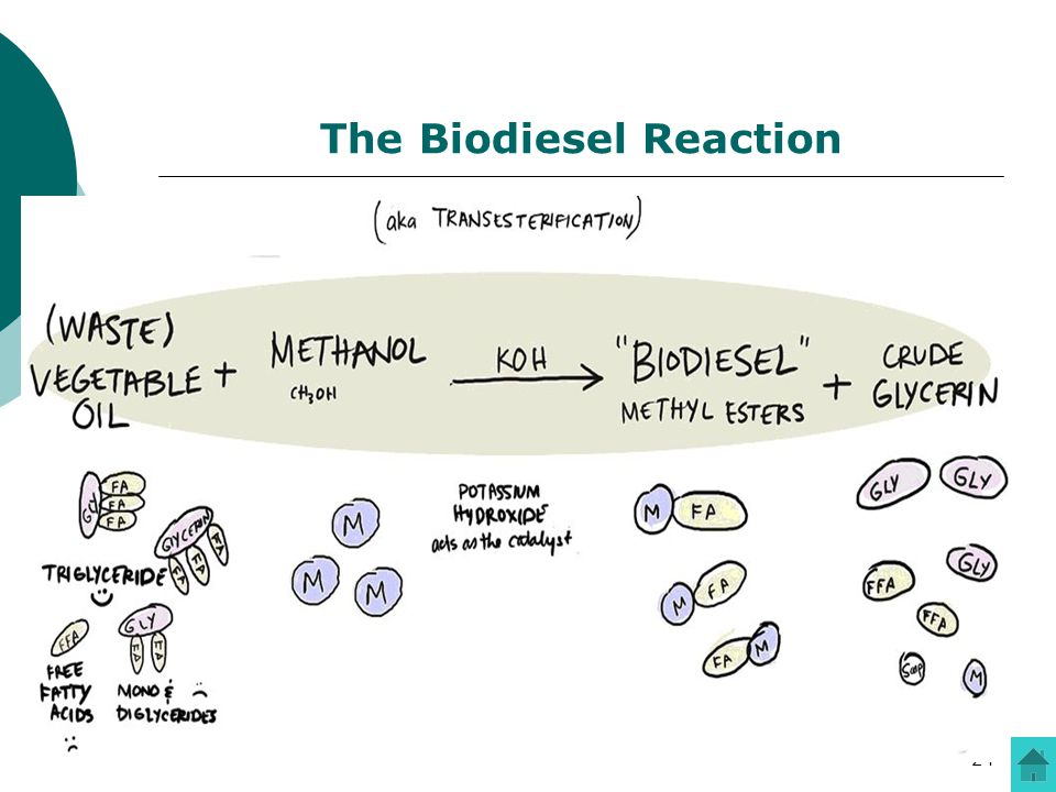 The Biodiesel Reaction