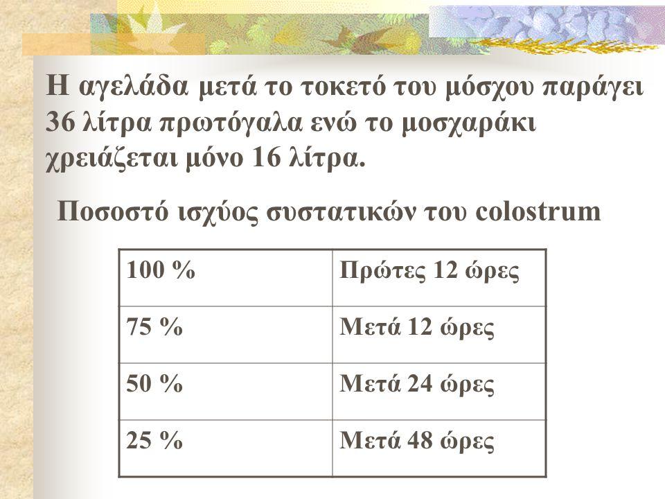 Η αγελάδα μετά το τοκετό του μόσχου παράγει 36 λίτρα πρωτόγαλα ενώ το μοσχαράκι χρειάζεται μόνο 16 λίτρα.