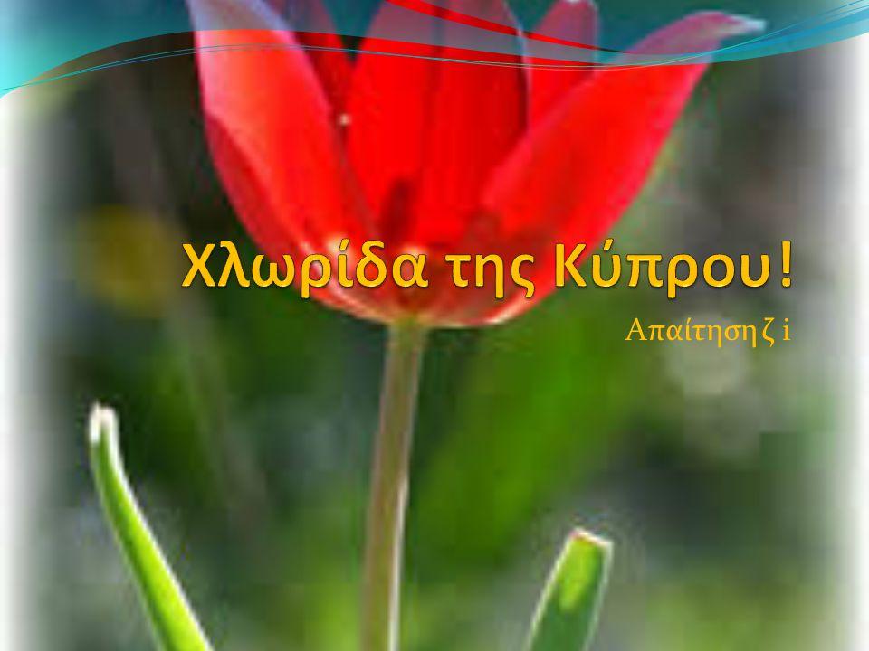 Χλωρίδα της Κύπρου! Απαίτηση ζ i