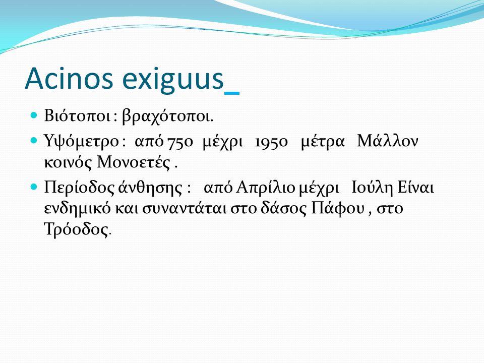 Acinos exiguus Βιότοποι : βραχότοποι.