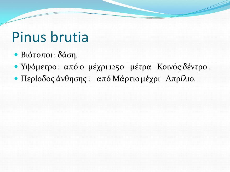 Pinus brutia Βιότοποι : δάση.